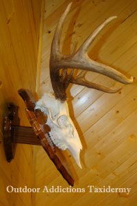 photo of skull & antler