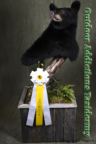 award winning bear